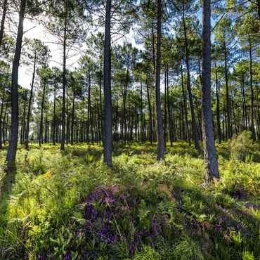 Revitalise yourself in the Landes forest